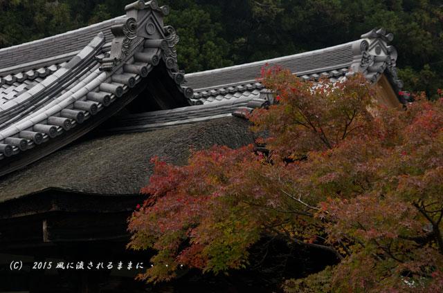 2015年11月撮影 大阪・延命寺の紅葉10