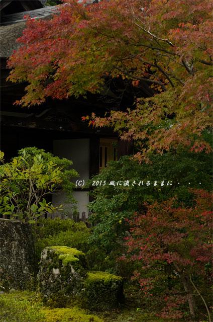 2015年11月撮影 大阪・延命寺の紅葉11