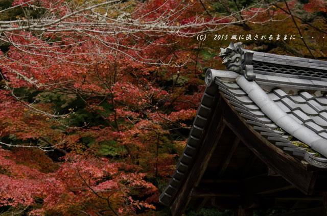 2015年11月撮影 大阪・延命寺の紅葉6