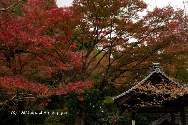 2015年11月撮影 大阪・延命寺の紅葉1