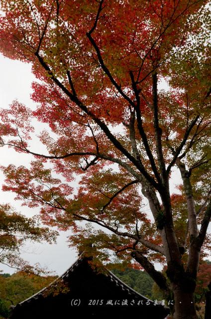 2015年11月撮影 大阪・延命寺の紅葉3