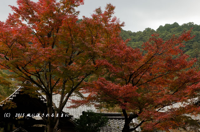 2015年11月撮影 大阪・延命寺の紅葉4