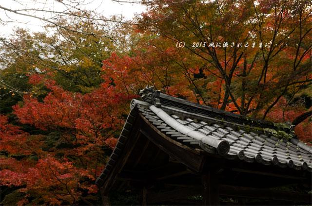 2015年11月撮影 大阪・延命寺の紅葉5