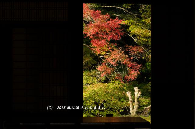 2015年11月撮影 奈良・芳徳寺の紅葉7
