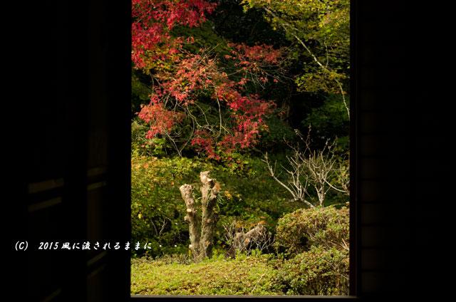 2015年11月撮影 奈良・芳徳寺の紅葉9