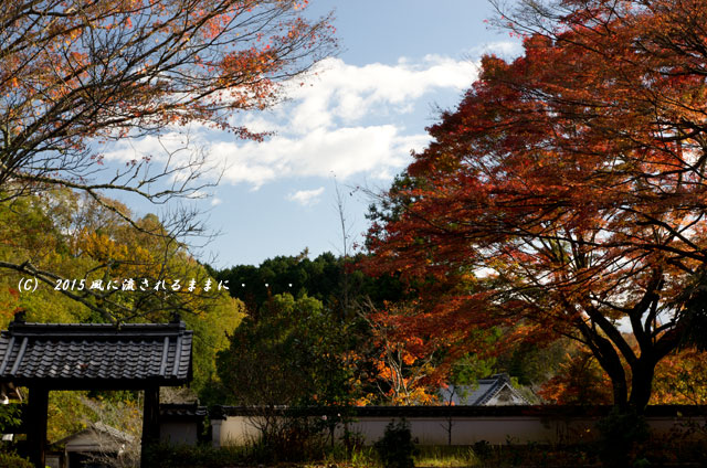 2015年11月撮影 奈良・芳徳寺の紅葉5