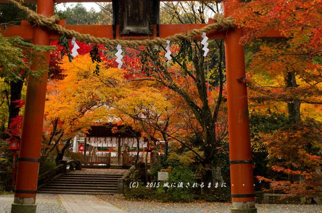 2015年11月撮影 京都・鍬山神社の紅葉1