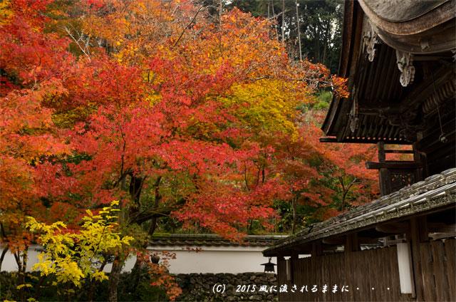 2015年11月撮影 京都・鍬山神社の紅葉3