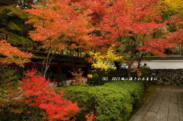 2015年11月撮影 京都・鍬山神社の紅葉4