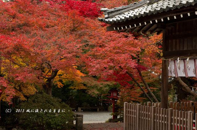 2015年11月撮影 京都・鍬山神社の紅葉6
