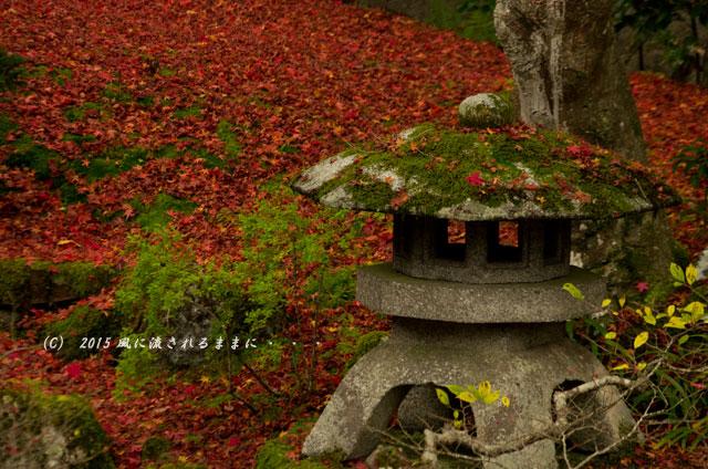 2015年11月撮影 京都・泉涌寺 御座所庭園の紅葉4