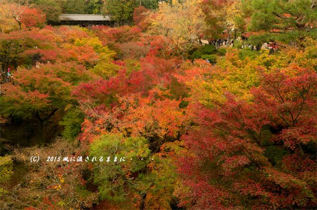 2015年11月撮影 京都・東福寺 通天橋から見た紅葉1