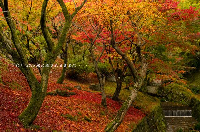 2015年11月撮影 京都・東福寺の紅葉2