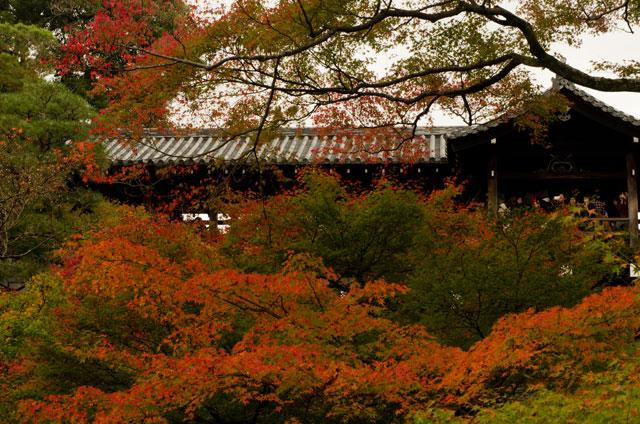 2015年11月撮影 京都・東福寺の紅葉3
