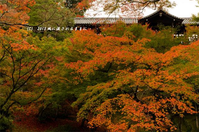 2015年11月撮影 京都・東福寺の紅葉4