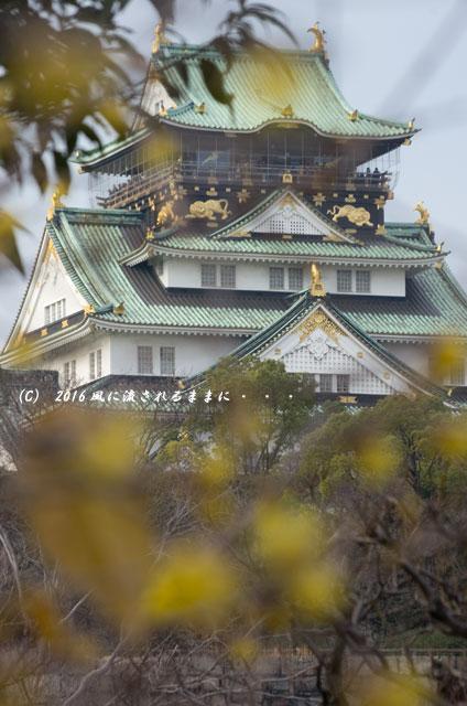 2016年1月11日撮影 大阪・大阪城梅林の蝋梅2