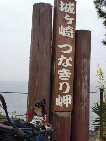 CIMG2363伊豆高原