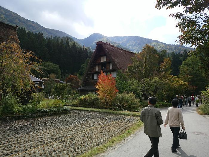 大自然に囲まれた白川郷、 秋はあたり一面が紅葉一色へと染まってゆきます ⑤