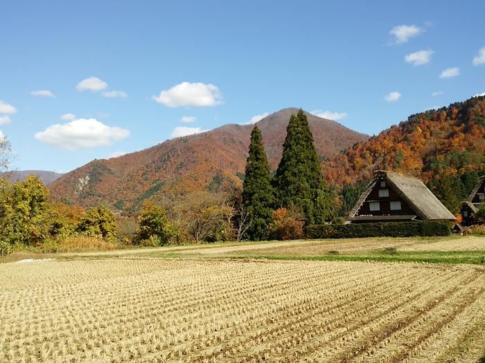 葉の舞い散る晩秋、何度訪れても見飽きることはありません ~白川郷~ ⑦