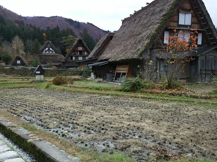 晩秋の紅葉~初冬は雪化粧など四季それぞれに変化する白川郷の表情も魅力的 ③