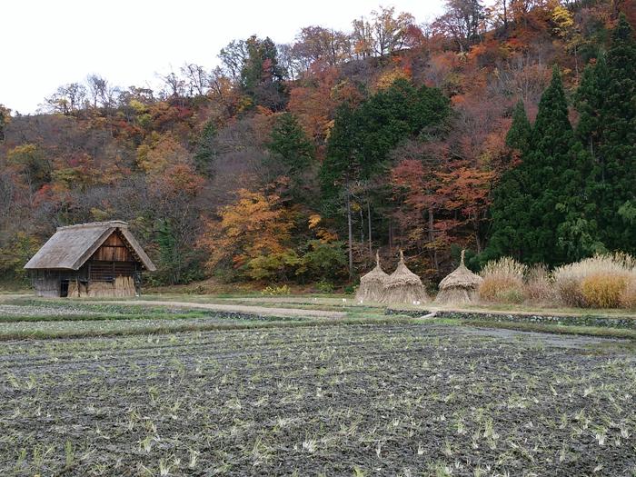 晩秋の紅葉~初冬は雪化粧など四季それぞれに変化する白川郷の表情も魅力的 ④