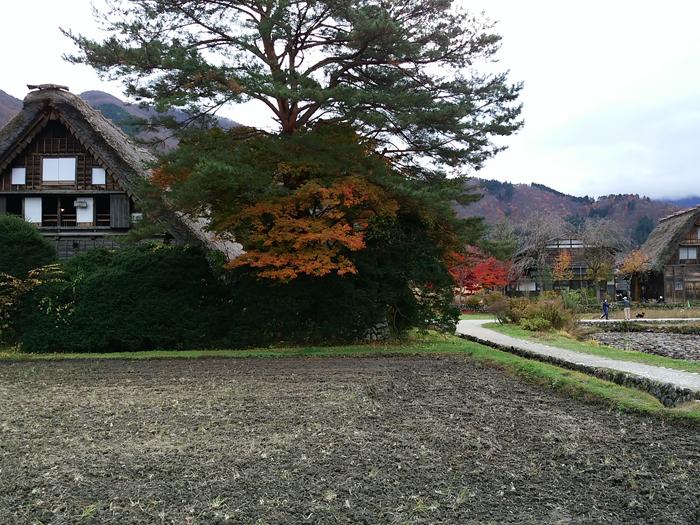 晩秋の紅葉~初冬は雪化粧など四季それぞれに変化する白川郷の表情も魅力的 ⑤