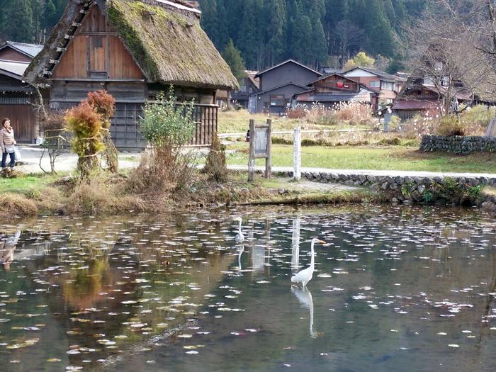 いよいよ、本格的な冬の到来を迎えましたね☆ 白川郷 ⑦