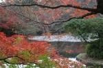 龍安寺の紅葉1