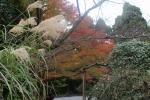 龍安寺の紅葉3