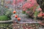 龍安寺の柿2