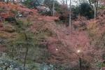 北野天満宮の紅葉1