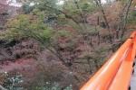 北野天満宮の紅葉2