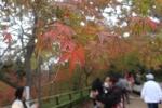 北野天満宮の紅葉3