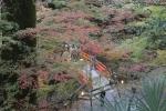 北野天満宮の紅葉4