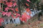 北野天満宮の紅葉7