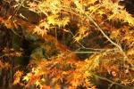 永観堂の紅葉1