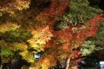 永観堂の紅葉4