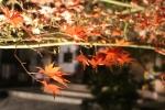 永観堂の紅葉5