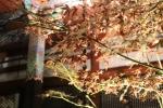 永観堂の紅葉9