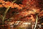 永観堂の紅葉10