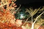 永観堂の紅葉14