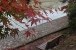 ベンチと紅葉1