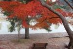 ベンチと紅葉2