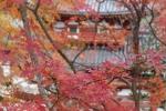 平等院と紅葉4