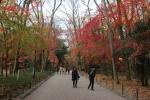 下鴨神社の紅葉1