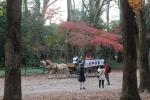 下鴨神社の馬車