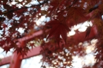 鳥居と紅葉2