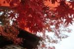 鳥居と紅葉4