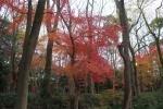下鴨神社の紅葉2