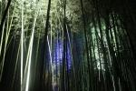 花灯路の竹林1